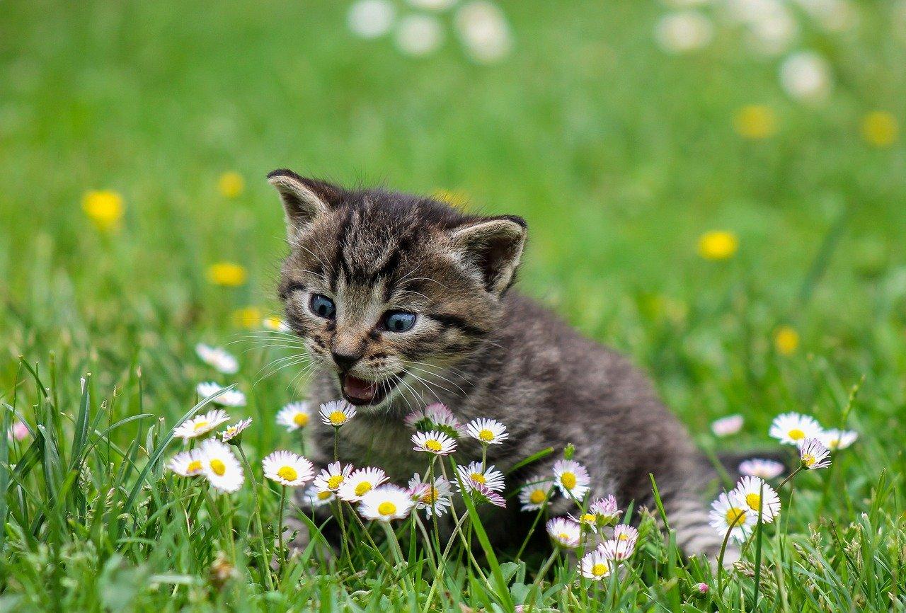 Zo houdt u uw jonge kitten gezond